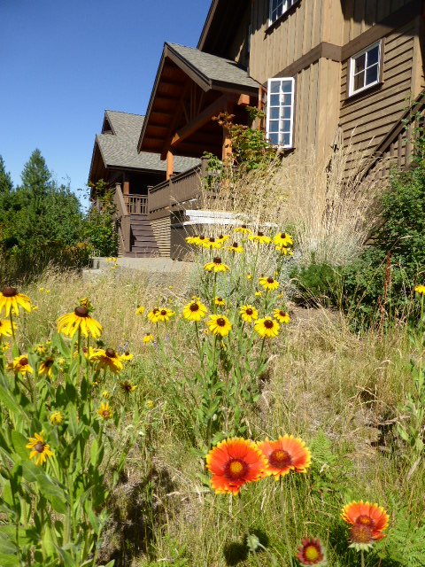 1 Wildflowers at Rear of the Cabin